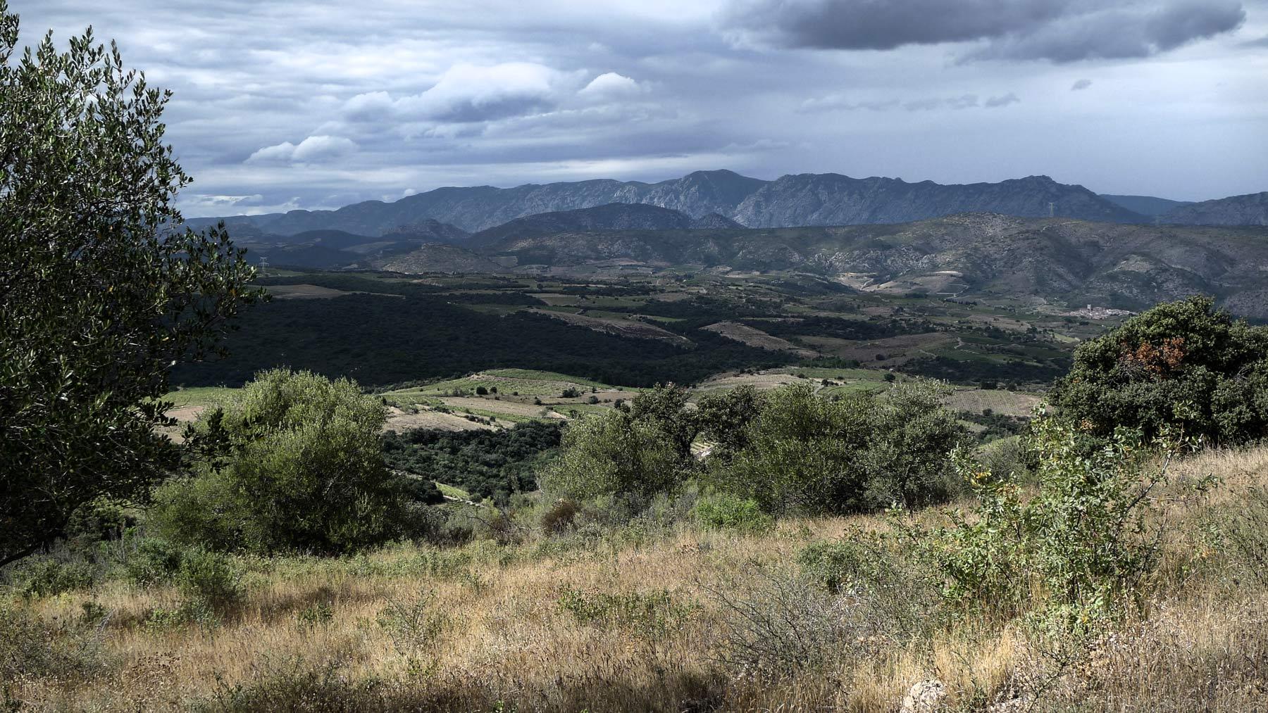 Weinberg im Roussillon, einer der Regionen im weinraum