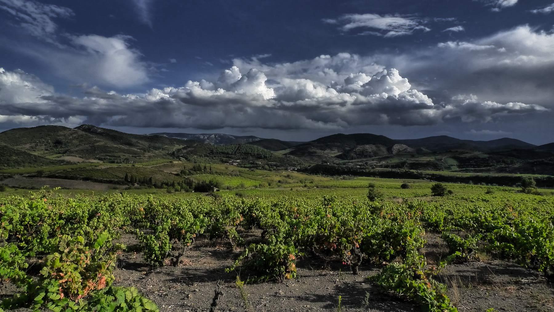 Fitou ist eine weitläufige Landschaft - meist karg und steinig, was Reben schätzen