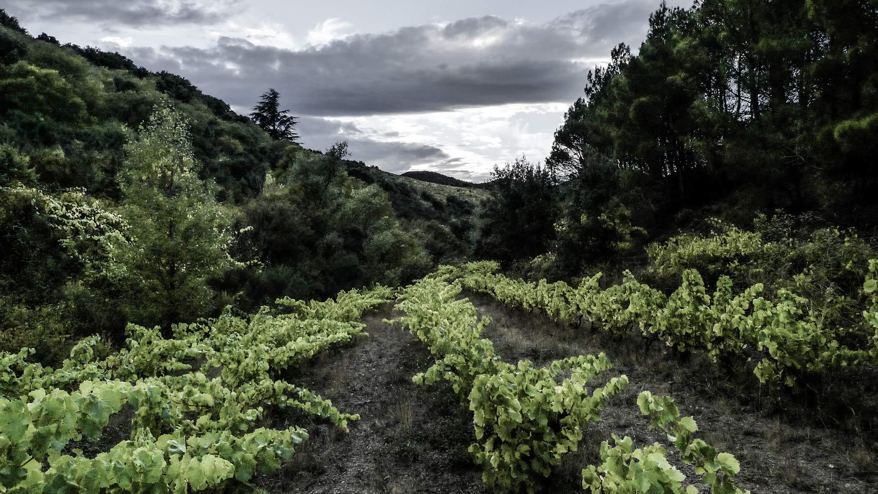 Winzige Weinberge im Fitou (Languedoc) bringen oft große Weine hervor. Den Weinberg habe ich mit Laurent Tibes erklommen. Einer seiner feinsten Weine - der Grangette - stammt von diesen wenigen Reben. Abgeschieden liegt der Weinberg im Fitou in den Bergen.