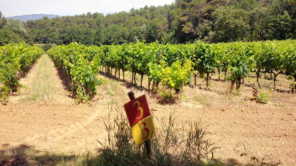 Der Weinweg um Dorgonne - die Stationen werdn in einem kleinen Heft erklärt, das der Besucher bekommt.