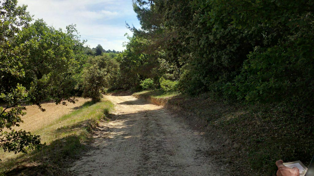 Der Wechsel von Wein, Oliven und anderen Büschen, Wäldchen macht das Leben in den Weinbergen am Luberon bunt.