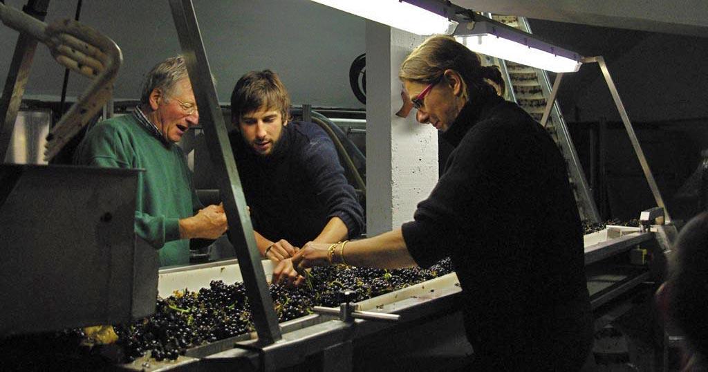 Familie Pellé sortiert die Pinot Noir Trauben im hellen Licht