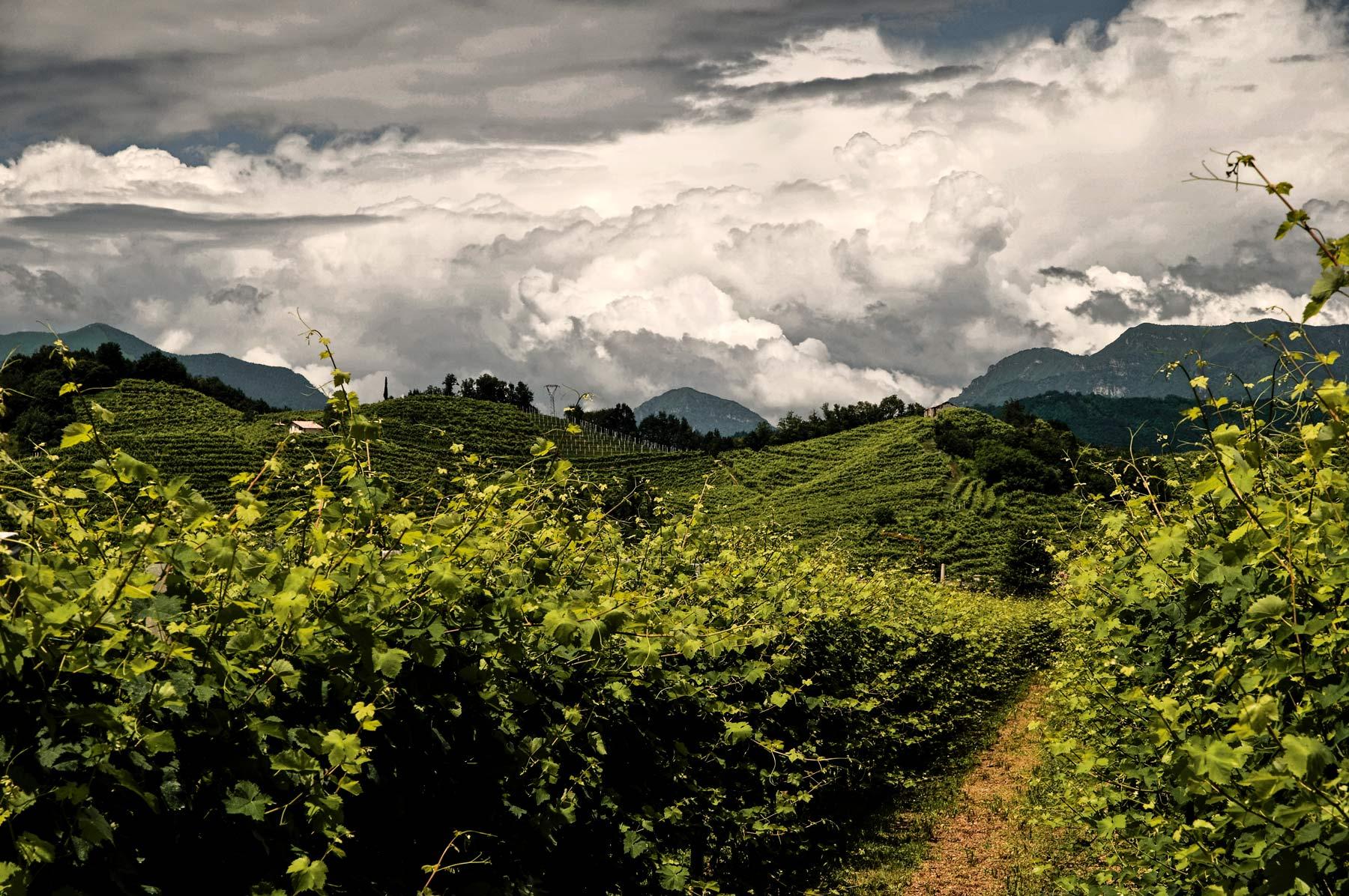 Ein Bild der Lagen von La Tordera. Steile Weinberge und ein Sommergewitter.