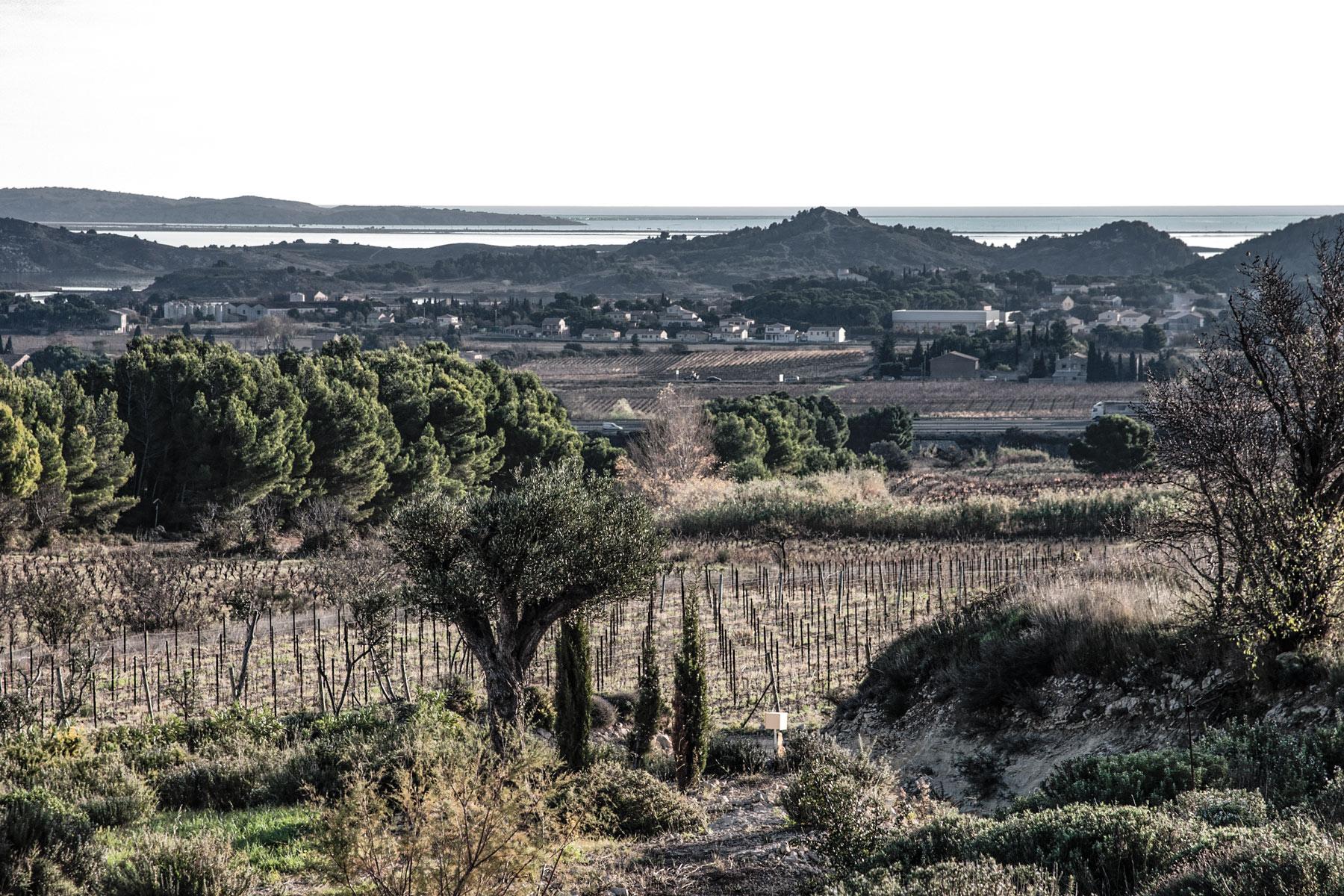 Weinberge am Meer in der Nähe von Narbonne