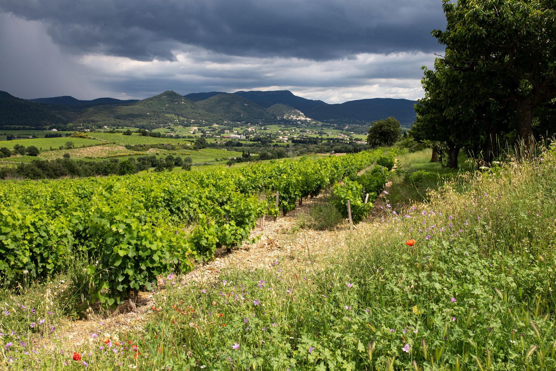 Gewitterstimmung in Rasteau an der südlichen Rhône