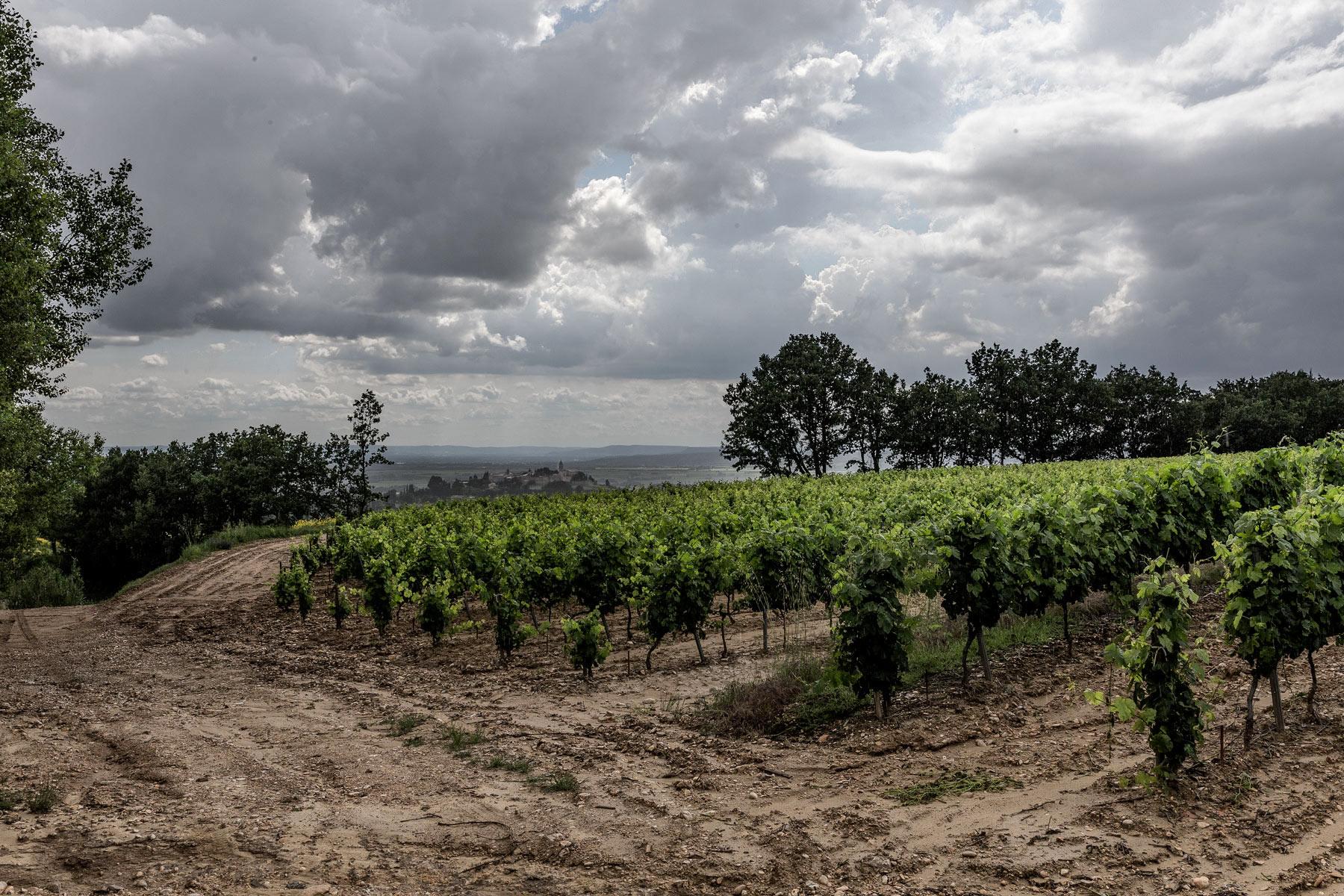 Das Wetter war 2018 schwierig in der Provence