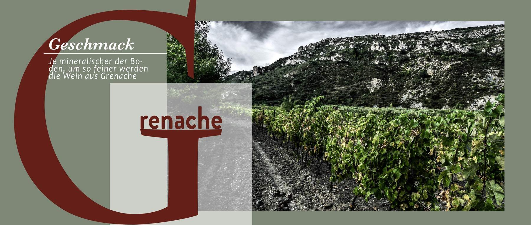 Grenache im Languedoc