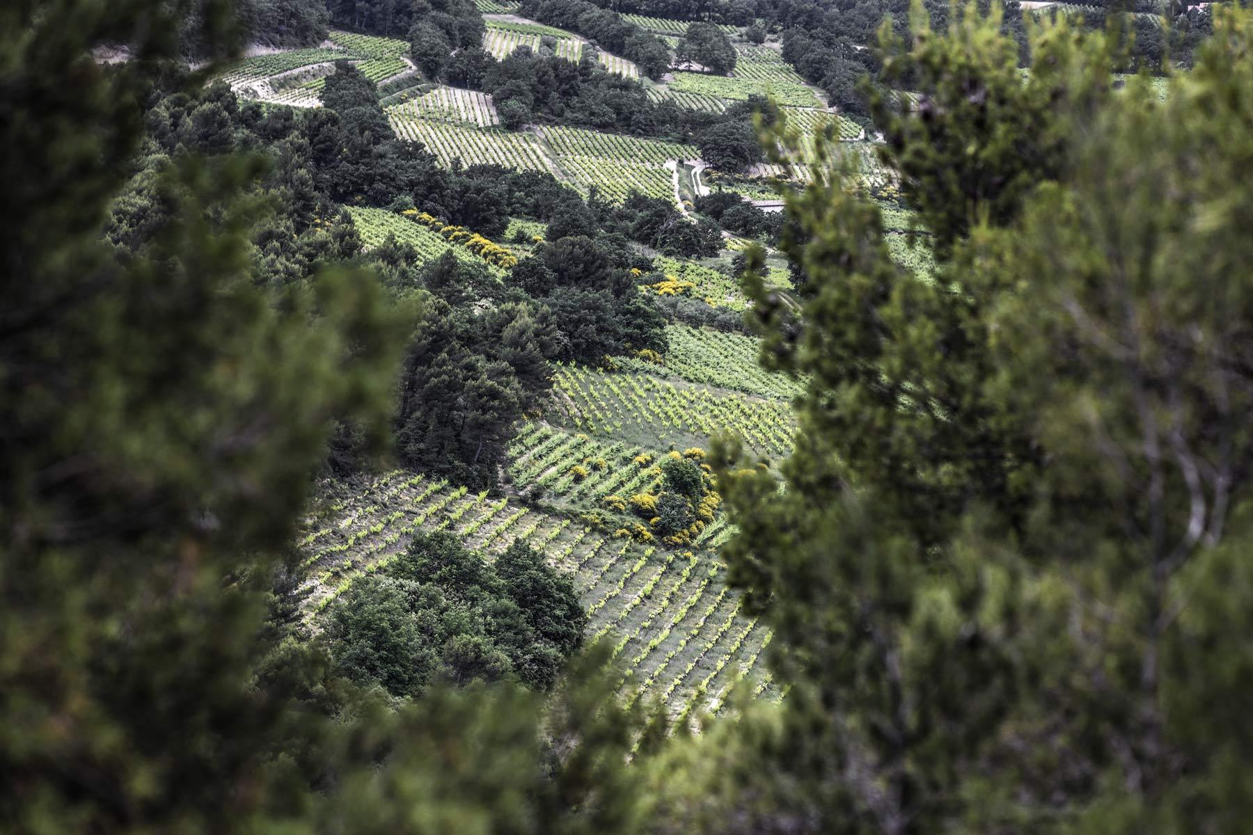 Weinberge für Grenache liegen oft an besonderen Plätzen hier versteckt oberhalb von Séguret in der Provence