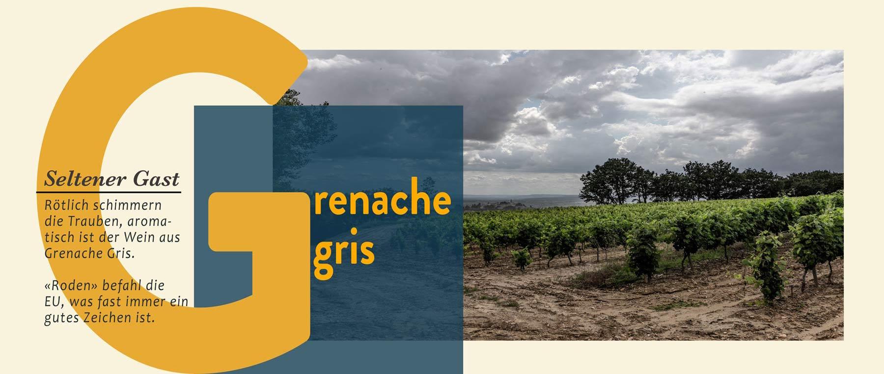 Grenache Gris Weine sind südliche Weine mit wenig Säure
