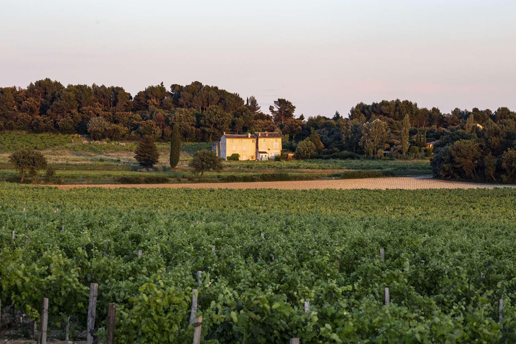 Weingut in der Nähe von Beaume de Venise