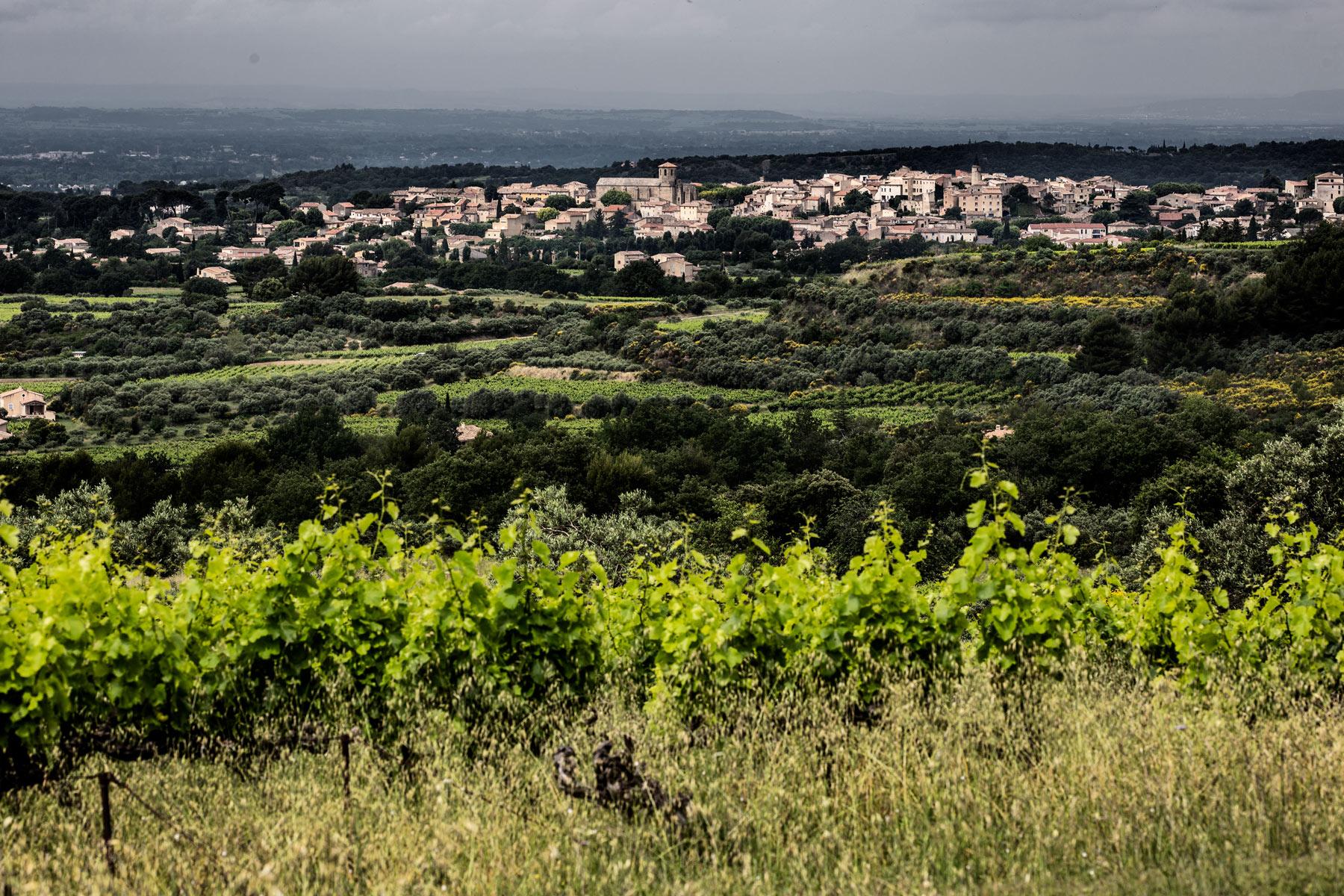 Südliche Weinberge in der Provence