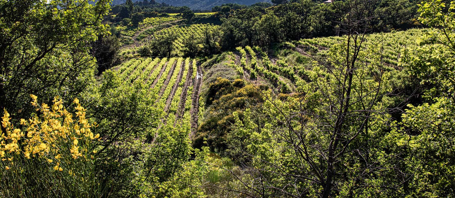 Die Weinberge der Domaine de Cassan liegen im Hinterland verborgen
