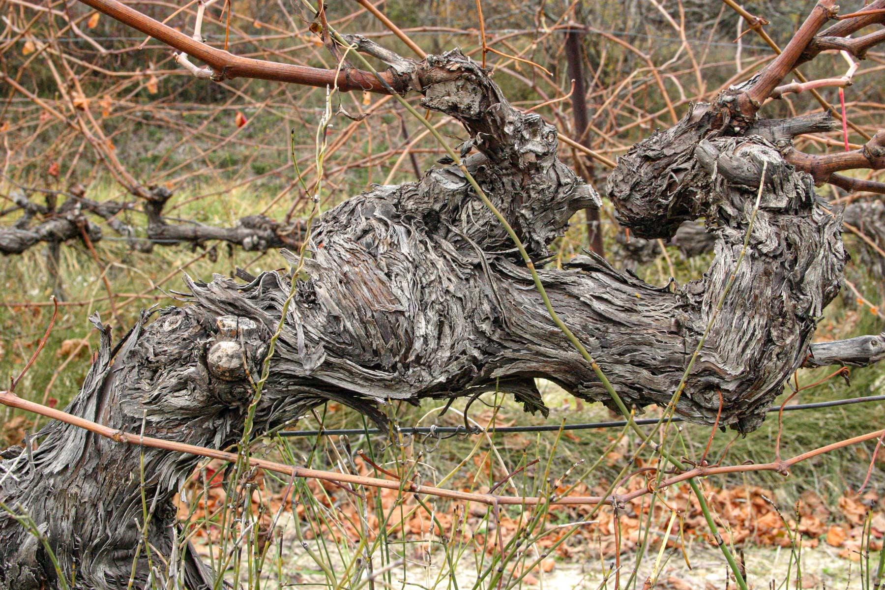 Grenache ist in den Weinen meist mit dem größten Anteil vertreten