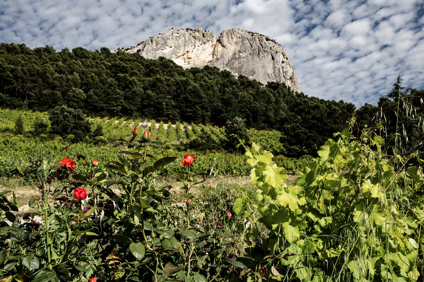 Das Weingut am Fuße des Saint Christophe