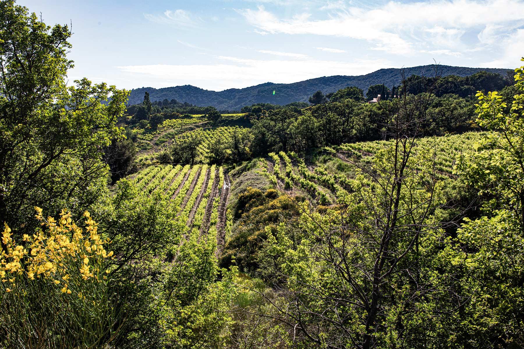 Eingebettet in eine intakte Natur liegen die abgeschiedenen Weinberge von Cassan