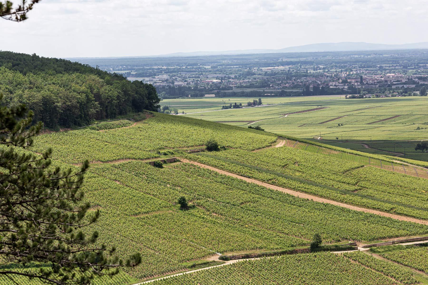 Südwestlich abfallende Grand Cru Lagen unterhalb der Bergkuppe Bois de Corton