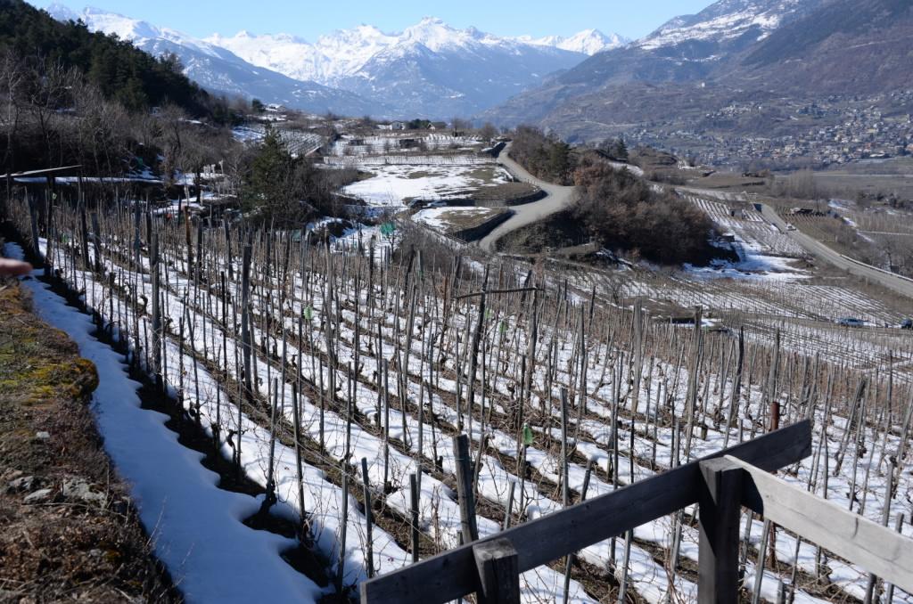 Weinbau umgeben von hohen Bergen ist auch für Cunéaz Nadir die Basis für herausragenden Wein
