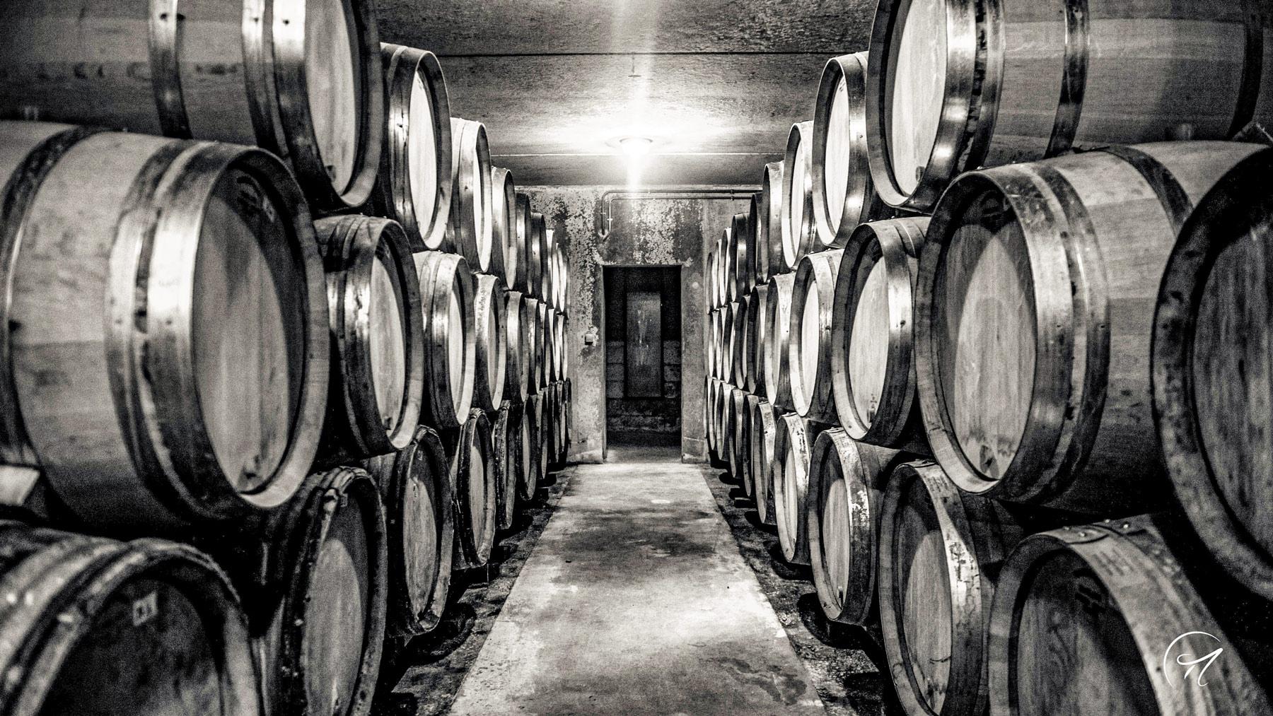Der Barrique Keller von Maillart in der Champagne